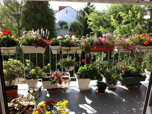 viager occupe 78 houilles bouquet 35000 photo 0