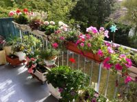 viager occupe 78 houilles bouquet 35000 photo 7